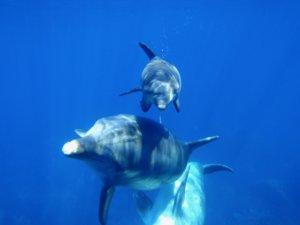 2頭のイルカの写真